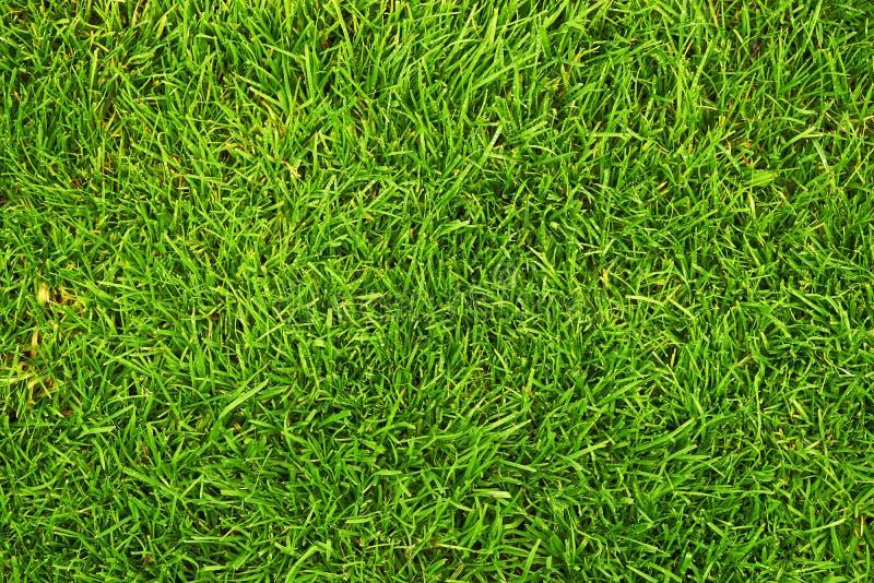 Świeża zielona trawa obrazy royalty free