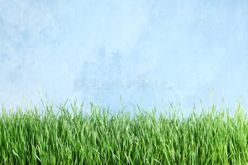 Świeża zielona trawa blisko bławego ogrodzenia obrazy royalty free