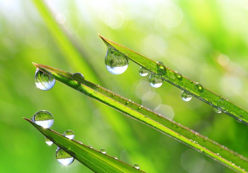 Świeża zielona trawa z rosa kropel zbliżeniem zdjęcia stock
