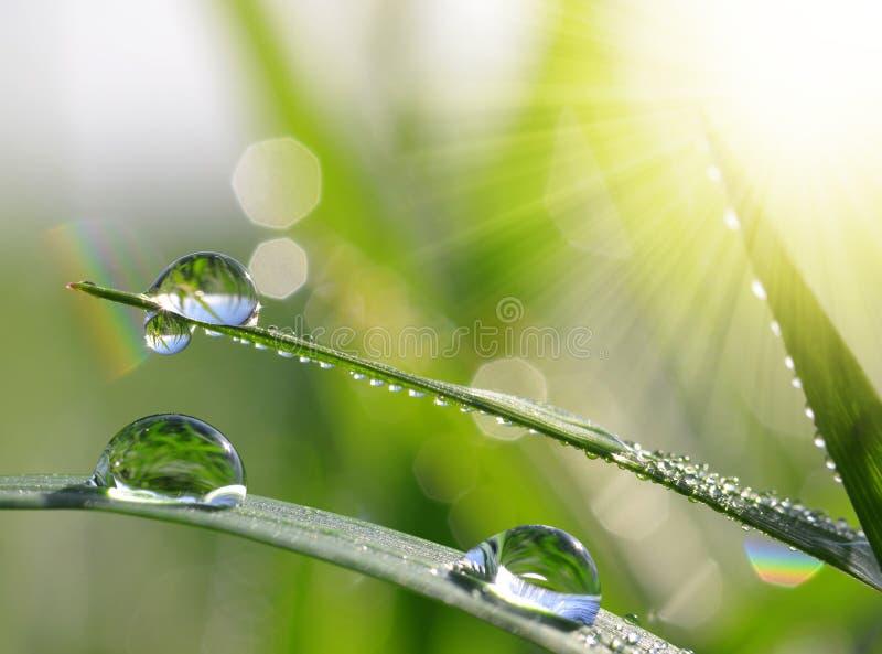 Świeża zielona trawa z wodą opuszcza zbliżenie zdjęcie stock