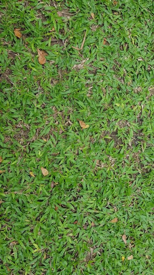 Świeża zielonej trawy tła tapeta zdjęcie royalty free