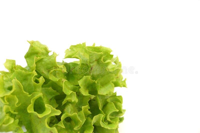 świeże 1 salat obraz stock