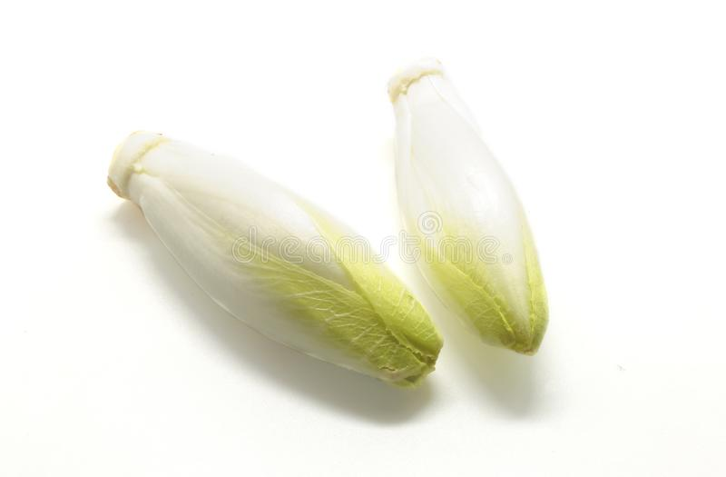 Świeże belgijskie endywie odizolowywać na białym tle fotografia royalty free