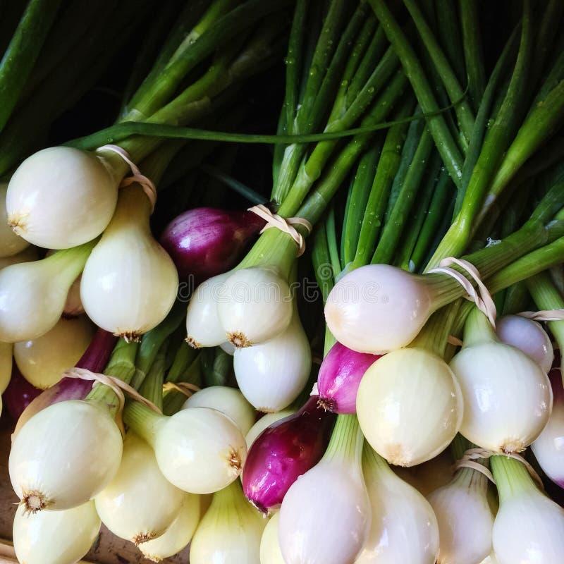 Świeże białe i purpurowe cebule zdjęcia royalty free