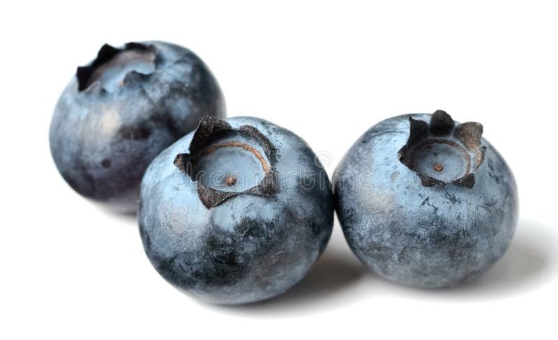 Świeże czarne jagody na białym tle obraz stock