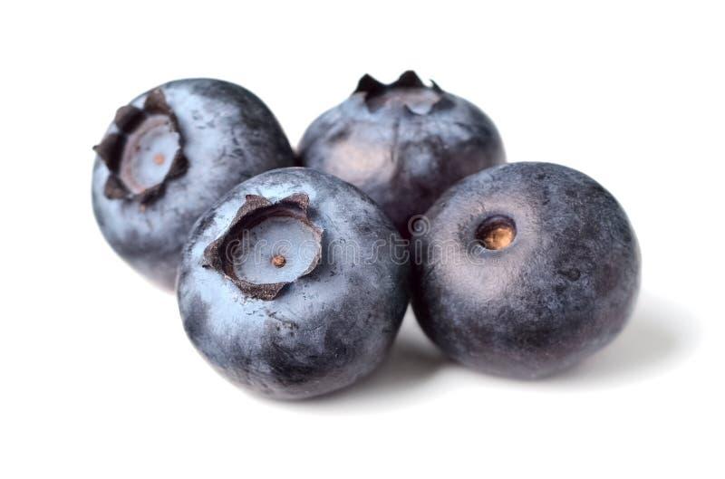 Świeże czarne jagody na bielu obraz royalty free