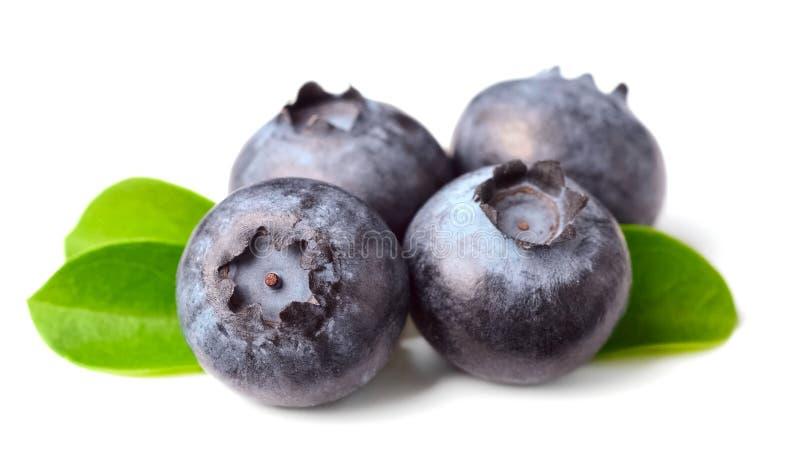 Świeże czarne jagody na bielu obrazy royalty free