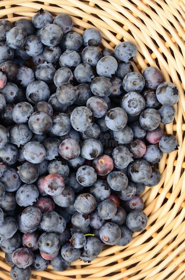 Świeże czarne jagody podczas lato wieczór zdjęcia royalty free