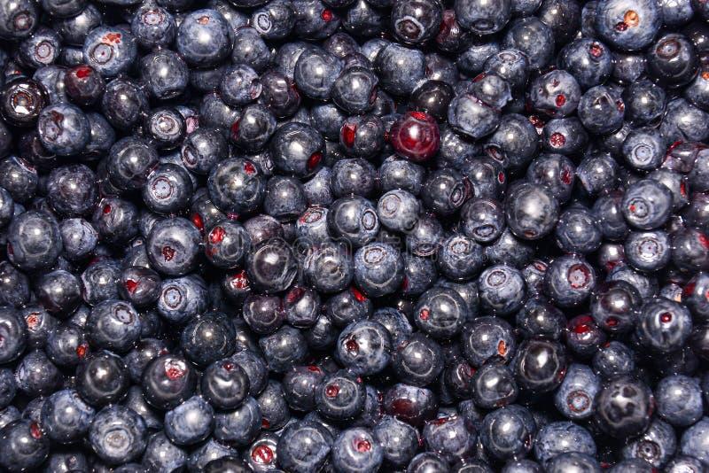 Świeże czarnych jagod jagody Zako?czenie Naturalny t?o Czarne jagody ulepszają wzrok obraz royalty free