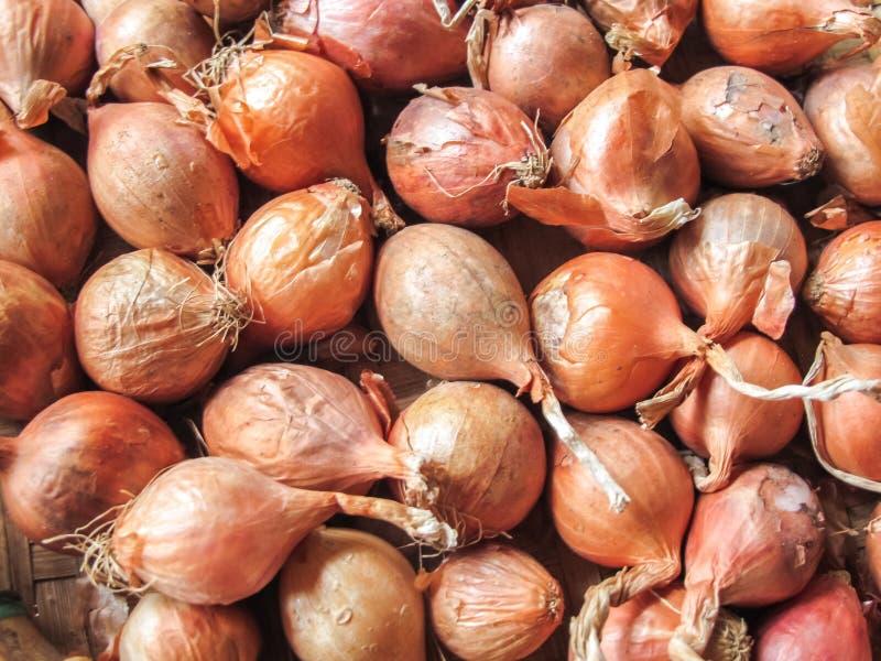 Świeże czerwone szalotki w koszu od organicznie gospodarstwa rolnego zdjęcia royalty free