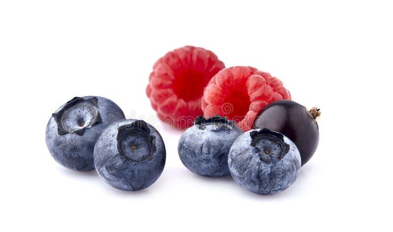 Świeże dojrzałe jagody w zbliżeniu na białym tle Malinki z czarnymi jagodami i czarnym rodzynkiem fotografia royalty free