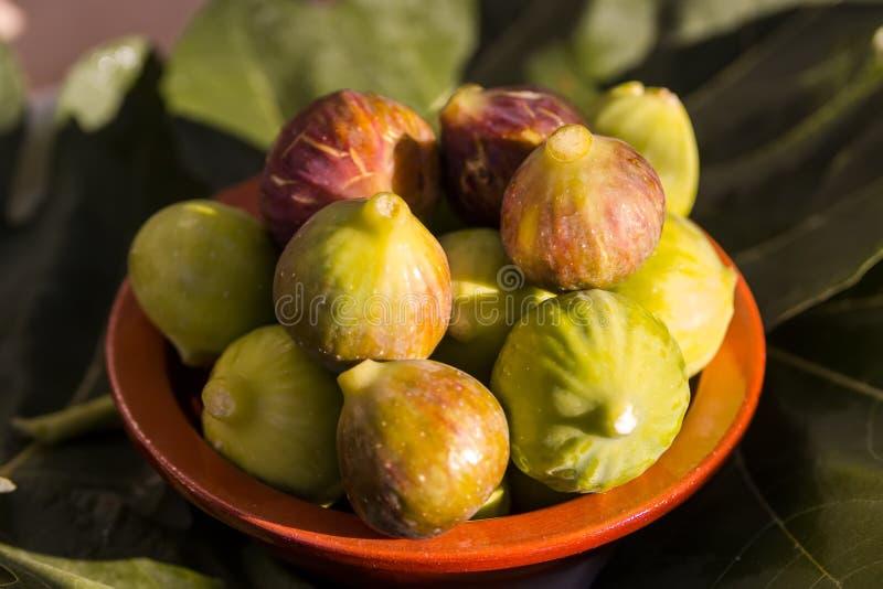Świeże figi w świetle słonecznym, w glinianym pucharze w górę, Apulia, Włoska owoc obraz royalty free