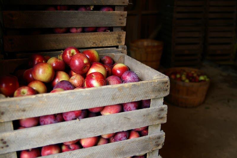 świeże jabłka zdjęcie stock