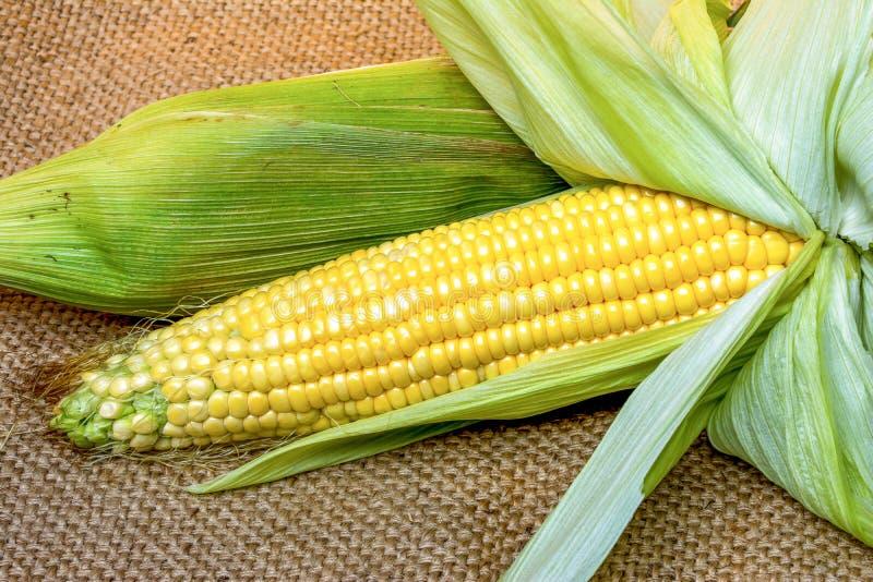 Świeże kukurudze na workowym tle zdjęcia royalty free
