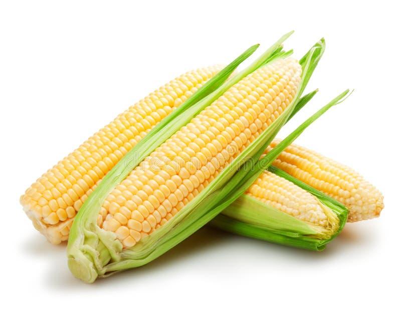 Świeże kukurydzane owoc zdjęcie stock