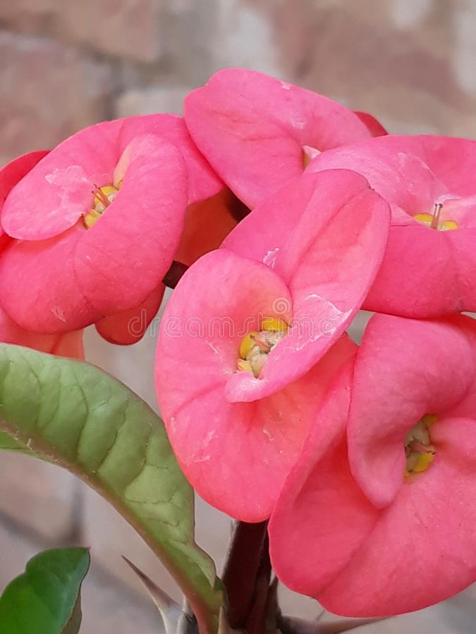 świeże kwiaty obrazy stock