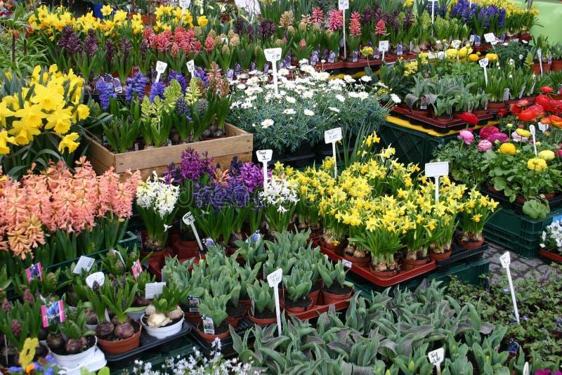 świeże kwiaty fotografia stock