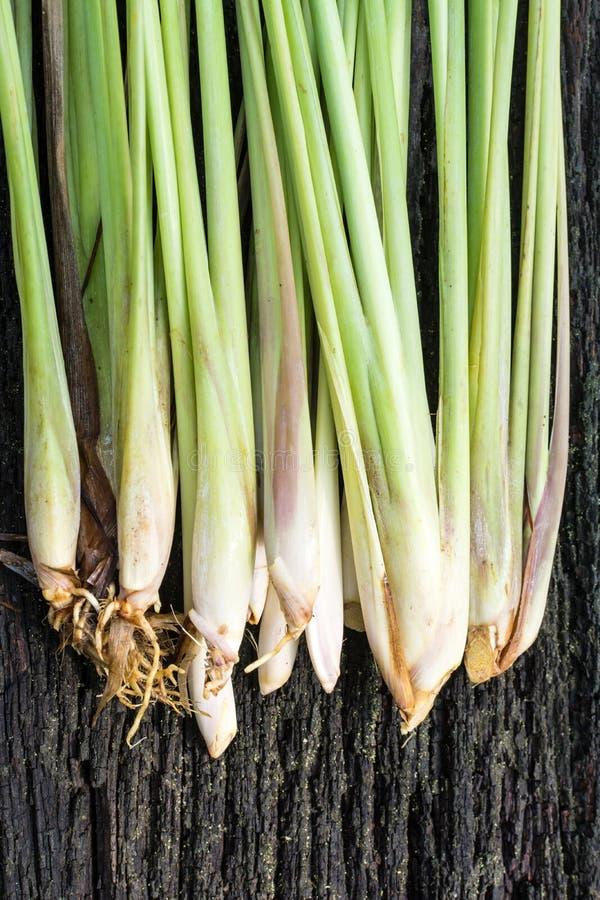 świeże lemongrass obrazy stock