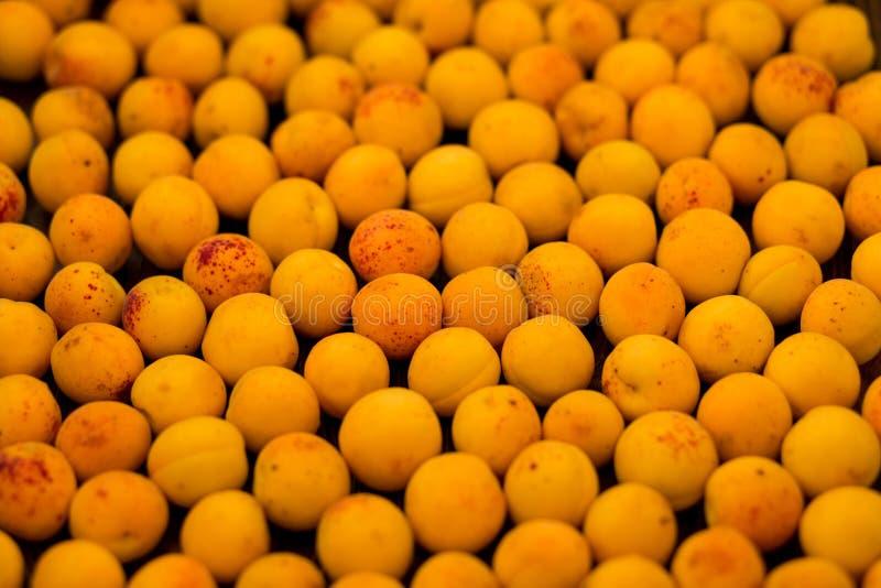 Świeże morele jako tło, tekstura, owocowy skład zdjęcie royalty free