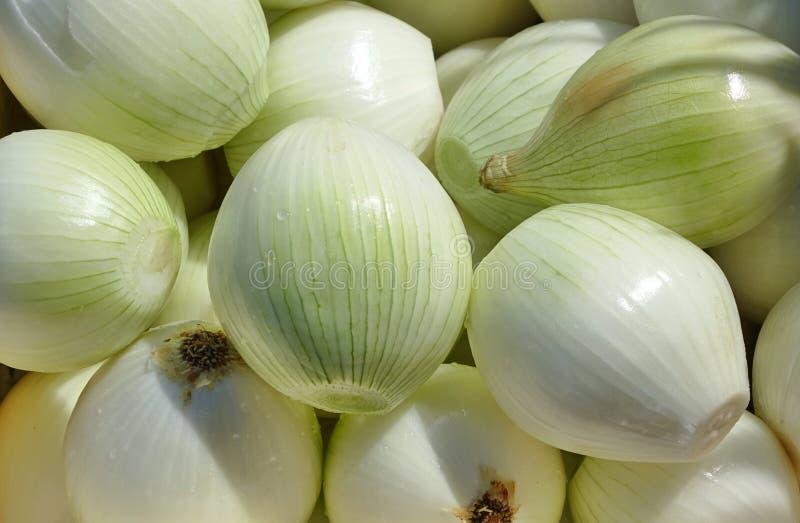 Świeże Obrane cebule zdjęcie stock