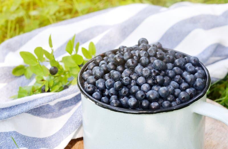 Świeże organicznie dzikie czarne jagody w starej retro filiżance obraz royalty free