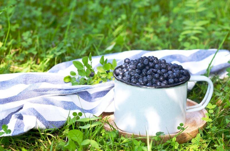 Świeże organicznie dzikie czarne jagody w starej retro filiżance zdjęcia stock
