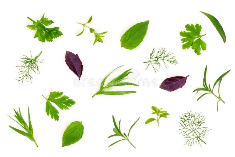 Świeże pikantność i ziele odizolowywający na białym tle Koperkowy pietruszka basilu macierzanki estragon Odgórny widok obraz royalty free