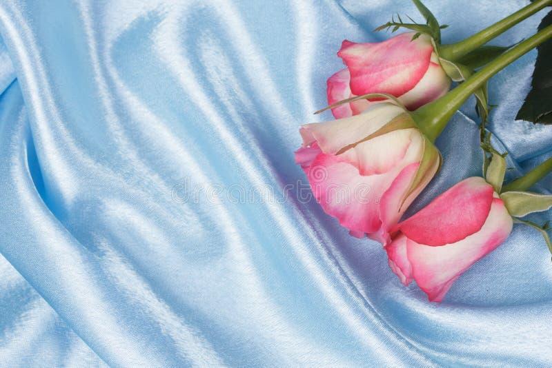 świeże różowe róże obrazy stock