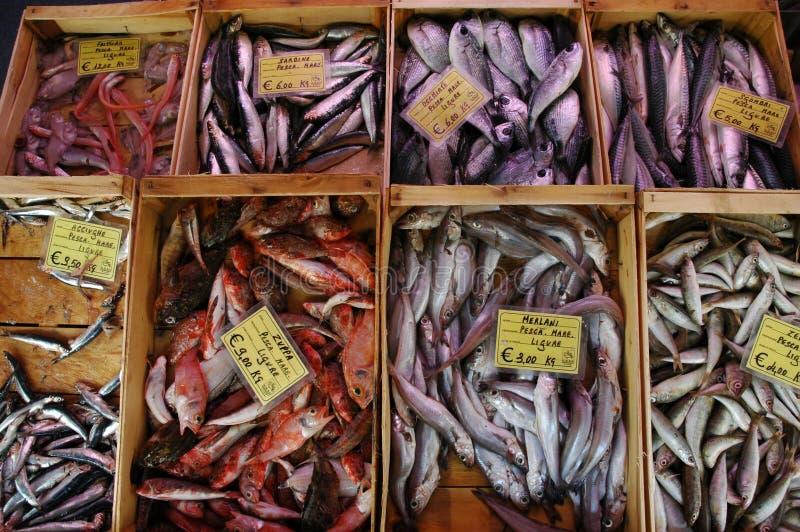 świeże ryby fotografia stock