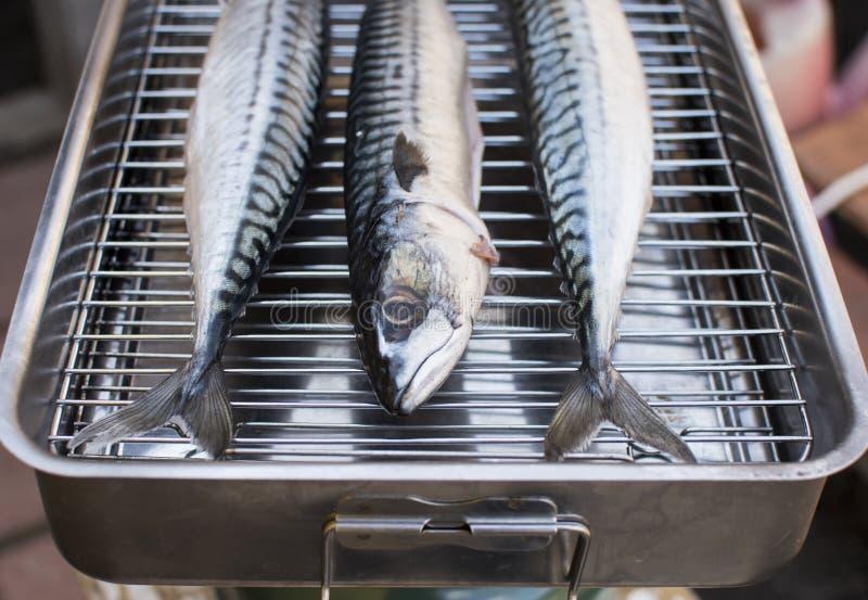 świeże ryby makrela zdjęcia royalty free
