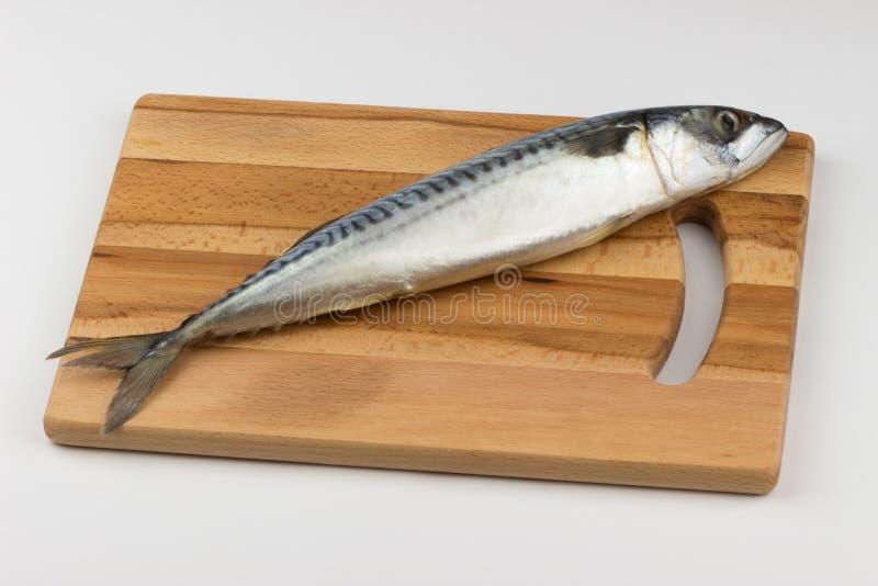 Świeże ryby makreli zdjęcia stock