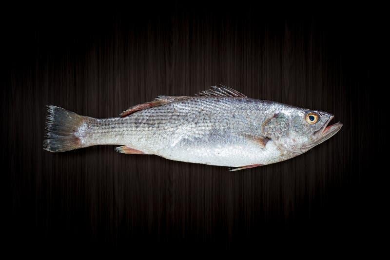 świeże ryby stark fotografia stock