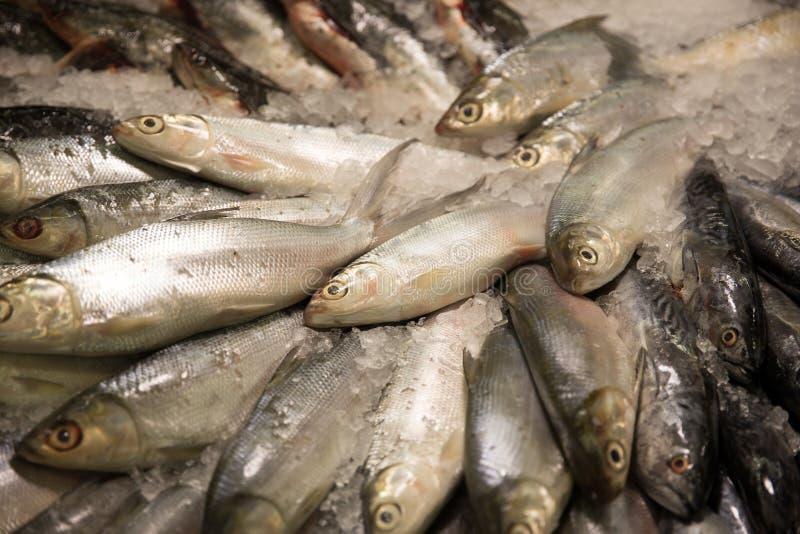 Świeże surowe ryba w rynku kramu fotografia stock