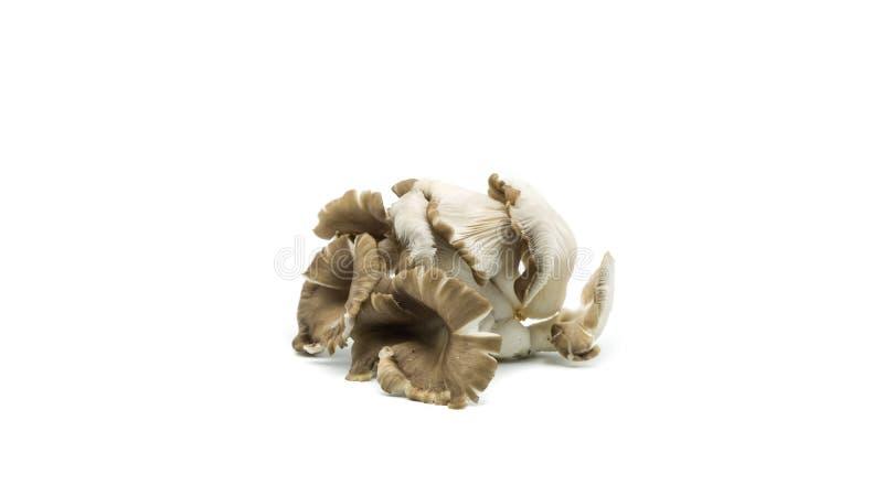 Świeże szampinion pieczarki odizolowywać na bielu obraz stock