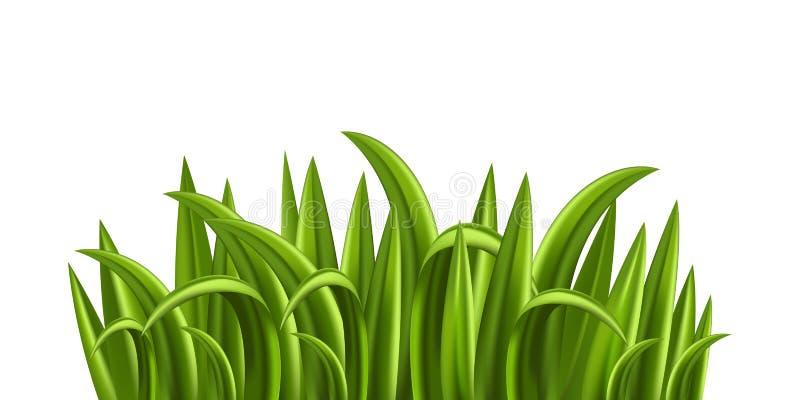 świeże trawy obraz royalty free