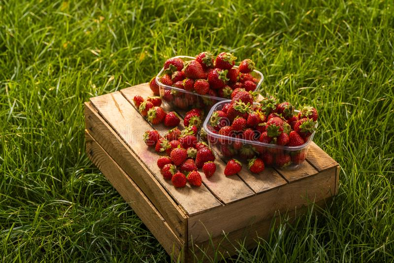 Świeże truskawki dla sprzedaży w plastikowych pudełkach, strzału zakończenie obraz royalty free
