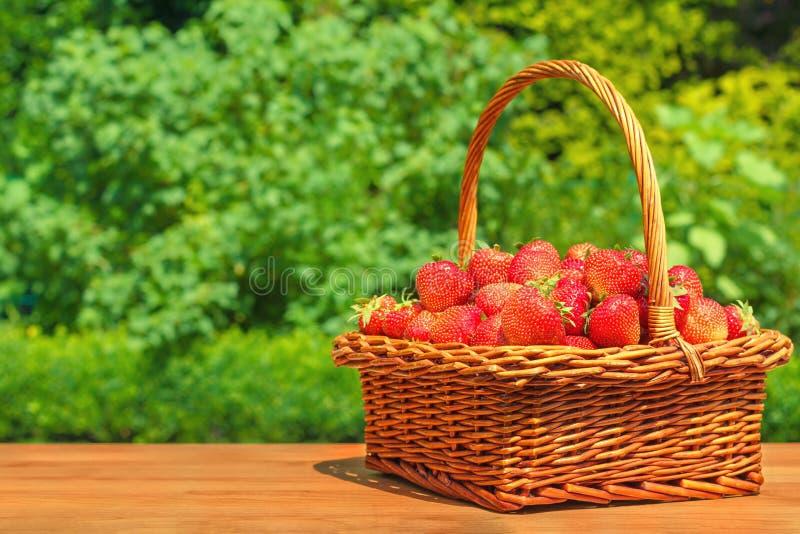 Świeże truskawki w koszu na drewnianym stole w ogródzie obraz royalty free