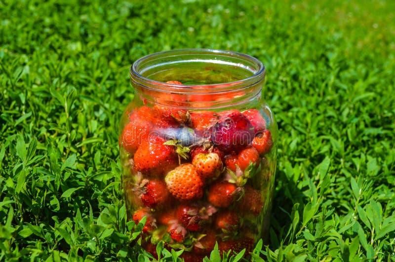 Świeże truskawki w szklanym słoju na trawie obrazy royalty free