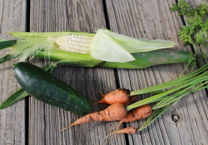 świeże warzywa ogrodowe fotografia royalty free