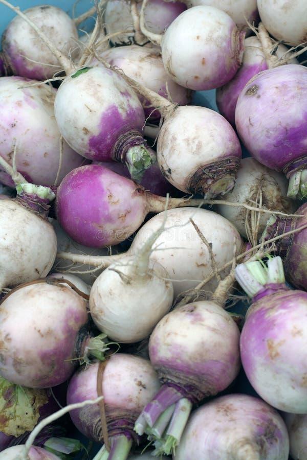 świeże warzywa ogrodowe zdjęcie royalty free