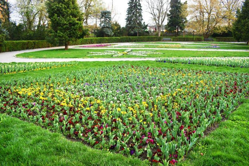 Świeże wczesne wiosen purpur, białych i różowych hiacyntowe żarówki, rosnąć w fowerbeds miasto parka ogród obraz royalty free