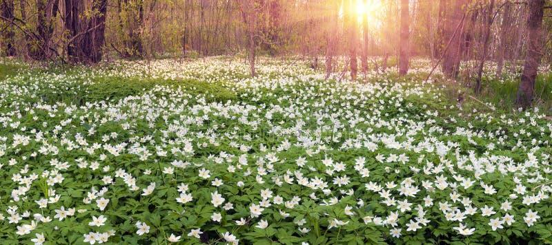 Świeże zielenie i delikatni fragrant kwiaty fotografia stock