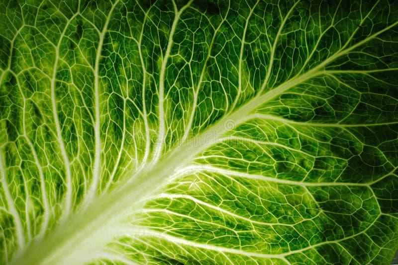 świeże zielona liść sałaty obraz royalty free