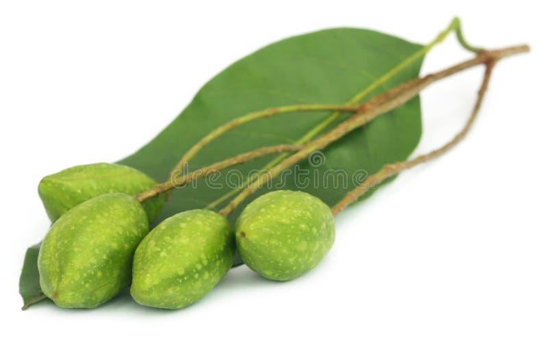Świeże zielone lecznicze haritaki owoc zdjęcia royalty free