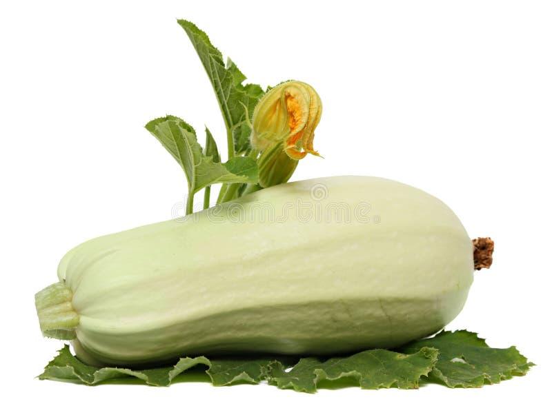 Świeże zucchini owoc z zieleń liśćmi odizolowywającymi na białym tle kwiatem i fotografia stock