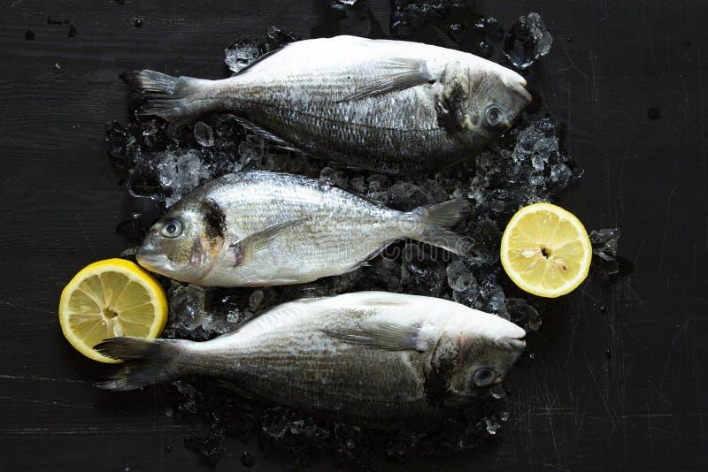 Świeżego dorado lub dennego leszcza ryba z cytryną i lodowa drewniana deska nad czarnym tłem zdjęcia stock