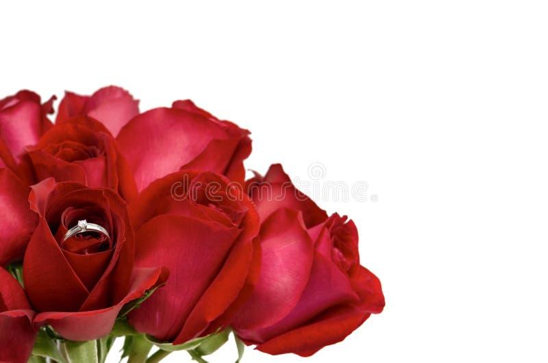 Świeżego kwiatu czerwone róże które srebnego pierścionek z diamentem dla Valentine's dnia fotografia stock