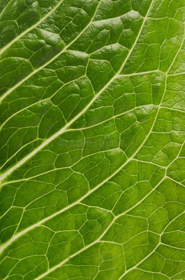 Świeżego liścia zielona sałatka makro-, tekstura, tło obrazy stock