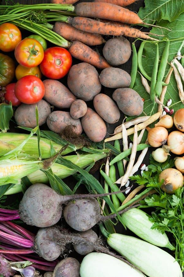 Świeżej odżywki warzyw organicznie tło Podtrzymywalny uprawia ziemię rolnictwo rynek zdjęcie stock