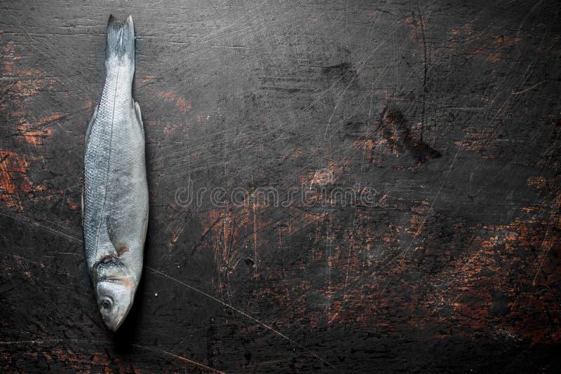 Świeżej ryby seabass surowy zdjęcia royalty free